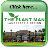 Featured Ad Plant Man